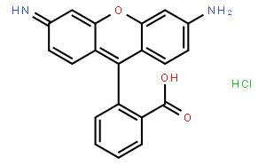 氯化罗丹明110