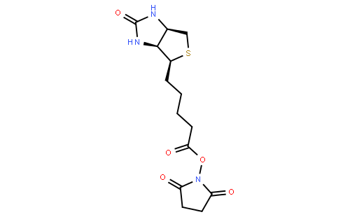 (+)生物素-N-琥珀酰亚胺基酯