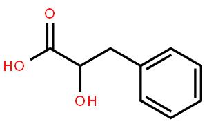 Phenylalanine metabolism